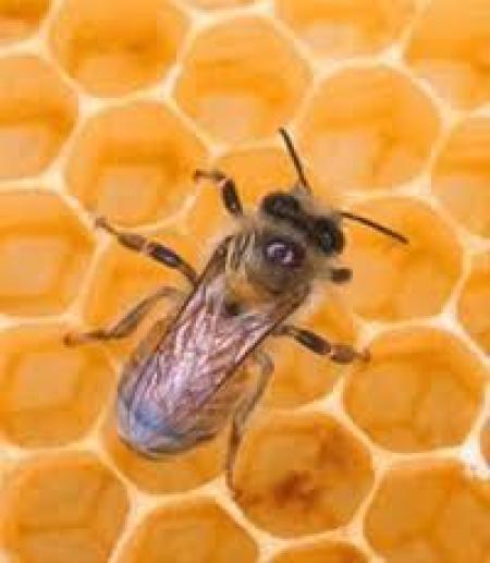 7 طرح توجیهی زنبورداری