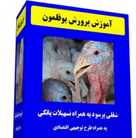 فیلم آموزش فارسی پرورش بوقلمون گوشتی