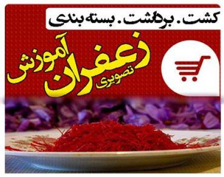آموزش فارسی کاشت و پرورش زعفران باکیفیت عالی وباگارانتی اصل