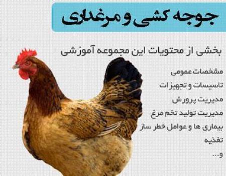 مجموعه آموزش فارسی جوجه کشی و مرغداری ( پروش مرغ )