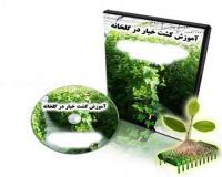 آموزش فارسی پرورش خیار گلخانه ای باکیفیت عالی وباگارانتی اصل