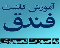 توضيحات آموزش فارسی تصویری کاشت و پرورش فندق باگارانتی باکیفیت عالی