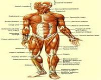 آناتومی انسان و تشریح کامل بدن زن و مرد