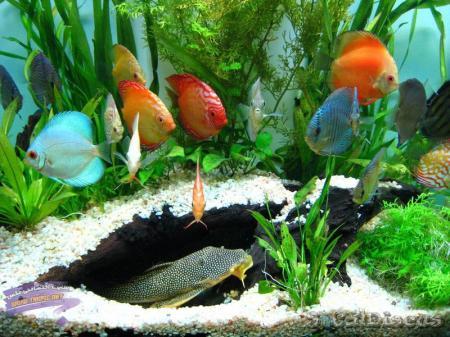 فروش پستی مستند ماهیان
