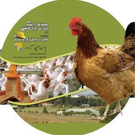 کارآفرینی پرورش مرغ