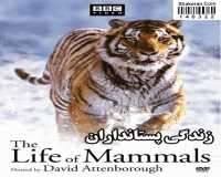 BBC The Life Of Mammals