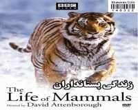 BBC The Life Of Mammals
