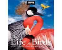 BBC The Life Of Birds