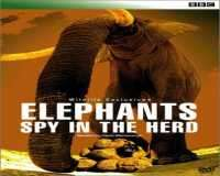 BBC Wildlife Special Elephants Spy In The Herd