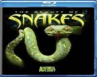 The Beauty of Snakes 2005 Bluray 1080p- زیبایی مارها