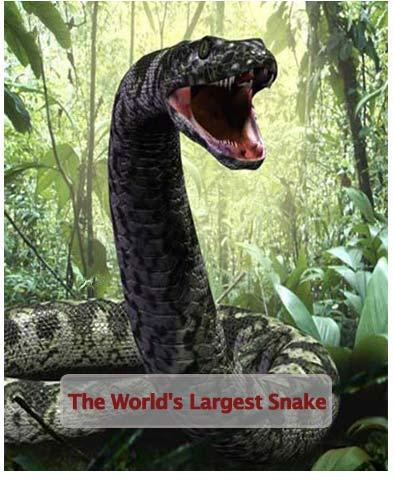 مستند بزرگ ترین مار دنیا